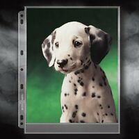 Archivalware Lineco Polypropylene Photo Album Pages, 9 X 11.375 inches, Holds 8