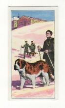 Dogs at work collector card the st