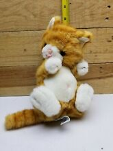 Plush tabby caress kitty kitten cat