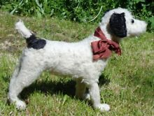 Beautiful old c1920 fox terrier dog