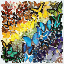 1000 piece rainbow butterfly s for