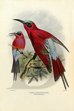 PLAQUE ALU REPRODUISANT UNE LITHOGRAPHIE CARMINE THROATED BEE EATER MEROPS