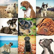 Dog Breed Greetings Cards - All occasions