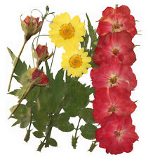 pressed flowers, rose, rose buds, daisy, foliage rose leaves