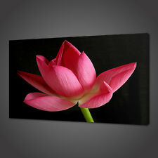 PINK WATER LILY CANVAS PICTURE PRINT WALL ART HOME DECOR FREE DELIVERY