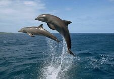 Poster Print Art A0 A1 A2 A3 A4 DOLPHINS IN BAY ISLANDS 3396 Animal Poster