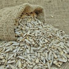 Sunflower Seeds, Premium Quality / 200gm / 250gm / 400gm / 800gm