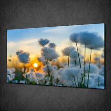 COTTON GRASS FIELD LANDSCAPE WALL ART CANVAS PRINT PICTURE VARIETY OF SIZES