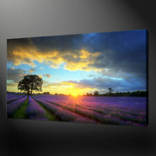SUNSET LAVENDER FARM LANDSCAPE WALL ART CANVAS PRINT PICTURE VARIETY OF SIZES