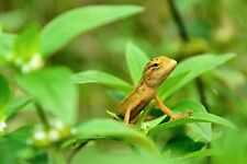 50+ Stunning Digital Photo Wallpaper - Gecko - Many More - Take a Look!