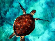 50+ Stunning Digital Photo Wallpaper - Turtle - Many More - Take a Look!