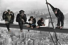 New Chimps on a Girder Monkey Business Maxi Poster
