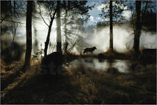 Poster A gray wolf, Canis lupus - Jim & Jamie Dutcher