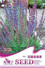 1 Pack 30 Sage Seeds Salvia Japonica Salvia Officinalis Garden Flowers A156