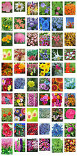 Flower Seeds for Your Border - 60 Different Varieties to Add Sparkle and Colour