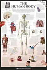New The Human Body Dorling Kindersley Maxi Poster