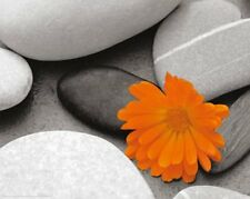 New Marigold and Pebbles Bright Flower amongst Stones Mini Poster