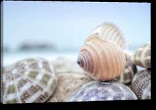 'Crescent Beach Shells 15' by Alan Blaustein Giclee Art Print on Wrapped Canvas