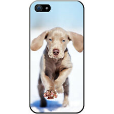 Weimaraner Vorstehhund Grey Ghost Dog Hard Case For Apple iPhone 5 / 5s