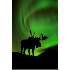 Poster Print Wall Art entitled Silhouette of Moose with green Aurora Borealis