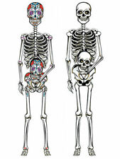 """DAY OF THE DEAD SKELETON CUT OUT 60"""" JOINTED HALLOWEEN ROOM DECORATION"""