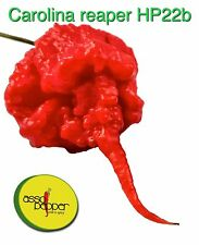 PEPERONCINO 5 10 25 50 100 SEMI PURI CAROLINA REAPER HP22B GUINNESS WORLD RECORD