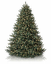 Classic Blue Spruce lChristmas Tree,6.5 ft ,CLEAR LIGHTS from BALSAM HILL.