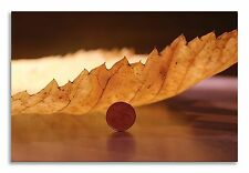 Elm Leaf Abstract Nature Centd Canvas Wall Art Picture Home Decor Print