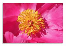 Flower Peony Pink Yellow Flower Canvas Wall Art Picture Home Decor Print