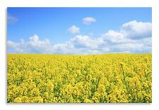 Landscape Rapeseed Field Yellow Blue Canvas Wall Art Picture Home Decor