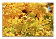 Fall Leaves Abstract nature Yellow  Canvas Wall Art Picture Home Decor Print