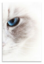 Cat Face Canvas Abstract Blue Eye Animals Portrait Wall Art Picture Home Decor