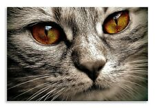 Cat Face Canvas Abstract Eye Face Grey Landscape Wall Art Picture Home Decor