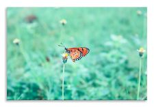 Butterfly Canvas Beautiful Green Field Landscape Wall Art Picture Home Decor