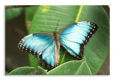 Large Blue Butterfly Canvas Beautiful Landscape Wall Art Picture Home Decor