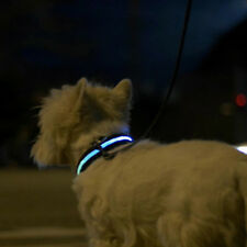 collare con luce led per cani safe light