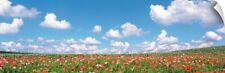 Wall Decal entitled Meadow flowers with cloudy sky in background
