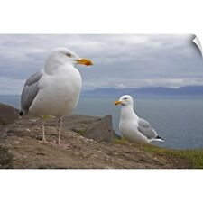 Wall Decal entitled Seagulls On Slea Head On The Dingle Peninsula; County Kerry,