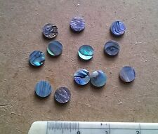 12 PAUA  NEW ZEALAND ABALONE  Luthier Dots  Inlay Fret  Side Marker - All Sizes