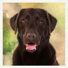 Chocolate Labrador, Quality Fabric Cushion Upholstery Craft Quilt Panel