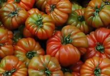 RAF Tomate semillas,variedad tamano grande,OLD SPANISH Heirloom TOMATE,Andalusia
