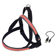 NOBBY NORVEGESE cani LED PETTORINA FLASH Maglia Rosso, varie misure, NUOVO
