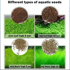 Aquarium Plant Seeds, Aquatic Green Grass Decoration Easy Planting Fish Tank
