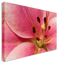 Large Lily Pink Close Up - Floral Flower Canvas Wall Art Picture