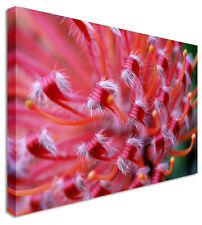Close Up Protea Pink Orchids Floral Flower Canvas Wall Art Picture