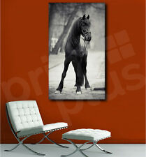 Black Stallion Riding Horse Black and White Canvas Art Poster Print Wall Decor