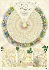 Bach Flower Poster Wall Chart for the 38 Essences Remedies Large A1 Lovely NEW