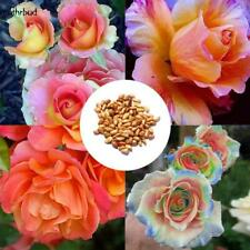 Rare Mixed Colors Rose Seeds Rainbow Rose Bonsai Flower Balcony Plant M5BD