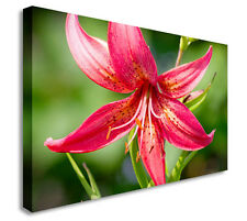 Tiger Lily Flower Close Up Floral Canvas Wall Art Picture - Large+ Any Size