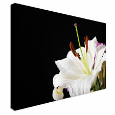 White lily close-up dark background Canvas Art Cheap Wall Print Home Interior
